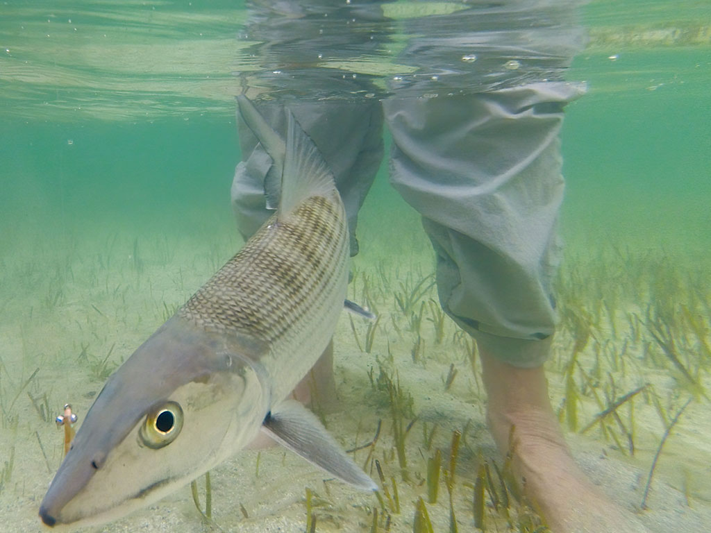 Belize Bonefish Saltwater