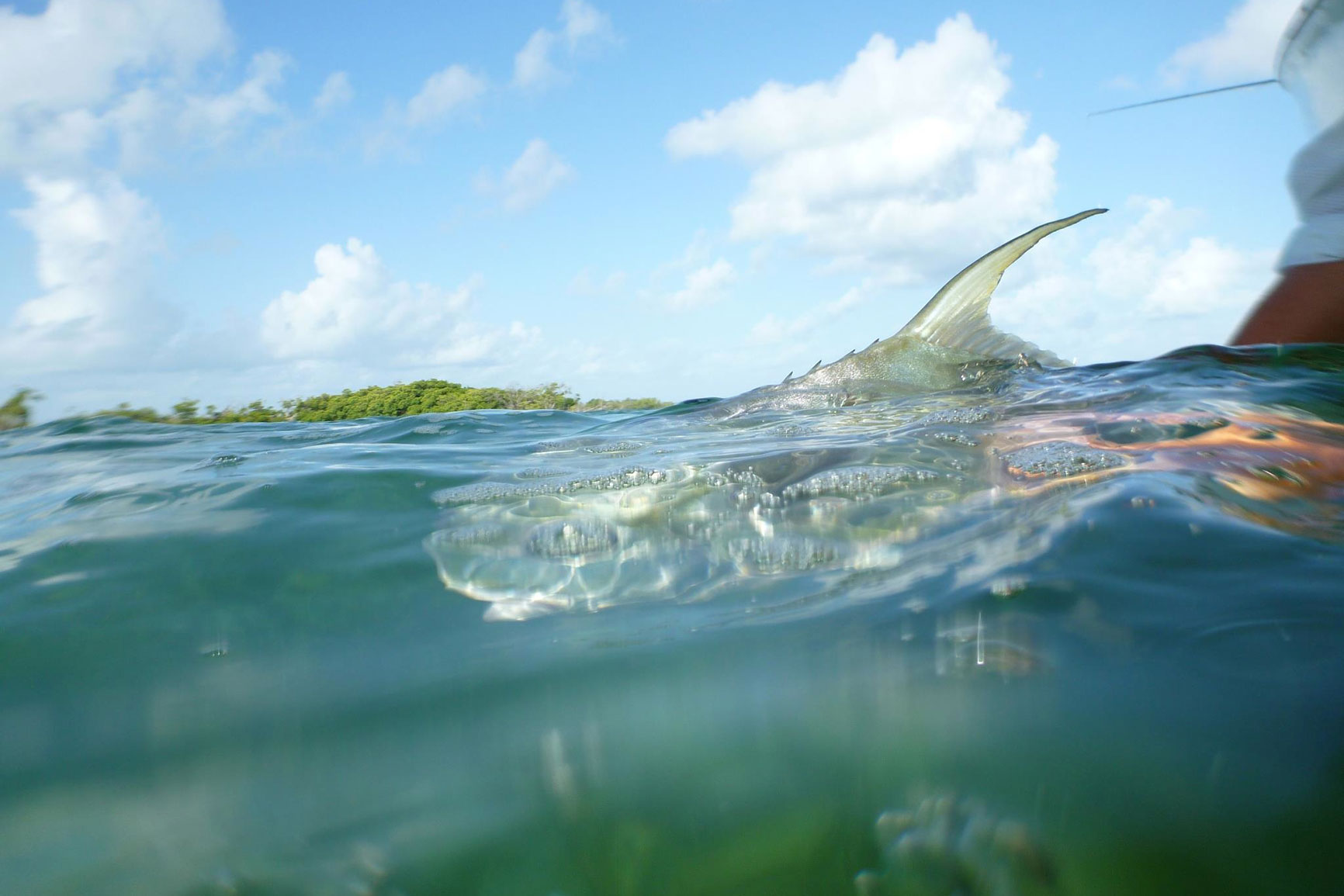 Permit saltwater fly fishing